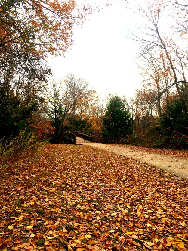 december leaves.2